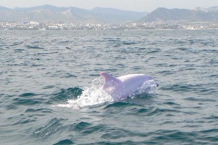 wie lange schlafen delfine